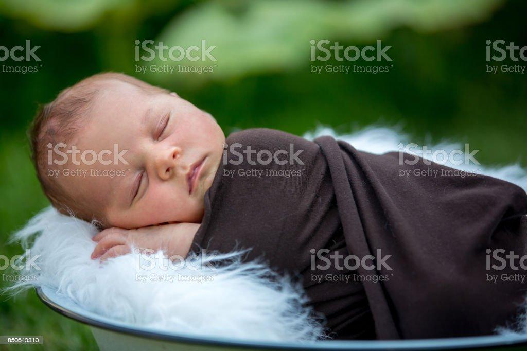 Cute newborn baby boy, sleeping peacefully in basket in garden stock photo