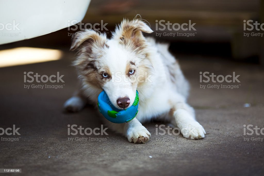 Cute occupied puppy stock photo