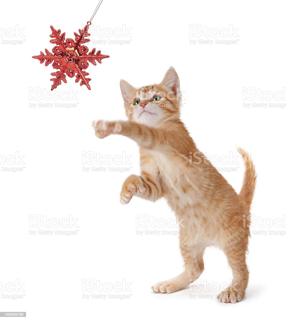 Cute Orange Kitten Playing with a Christmas Ornament on White royalty-free stock photo