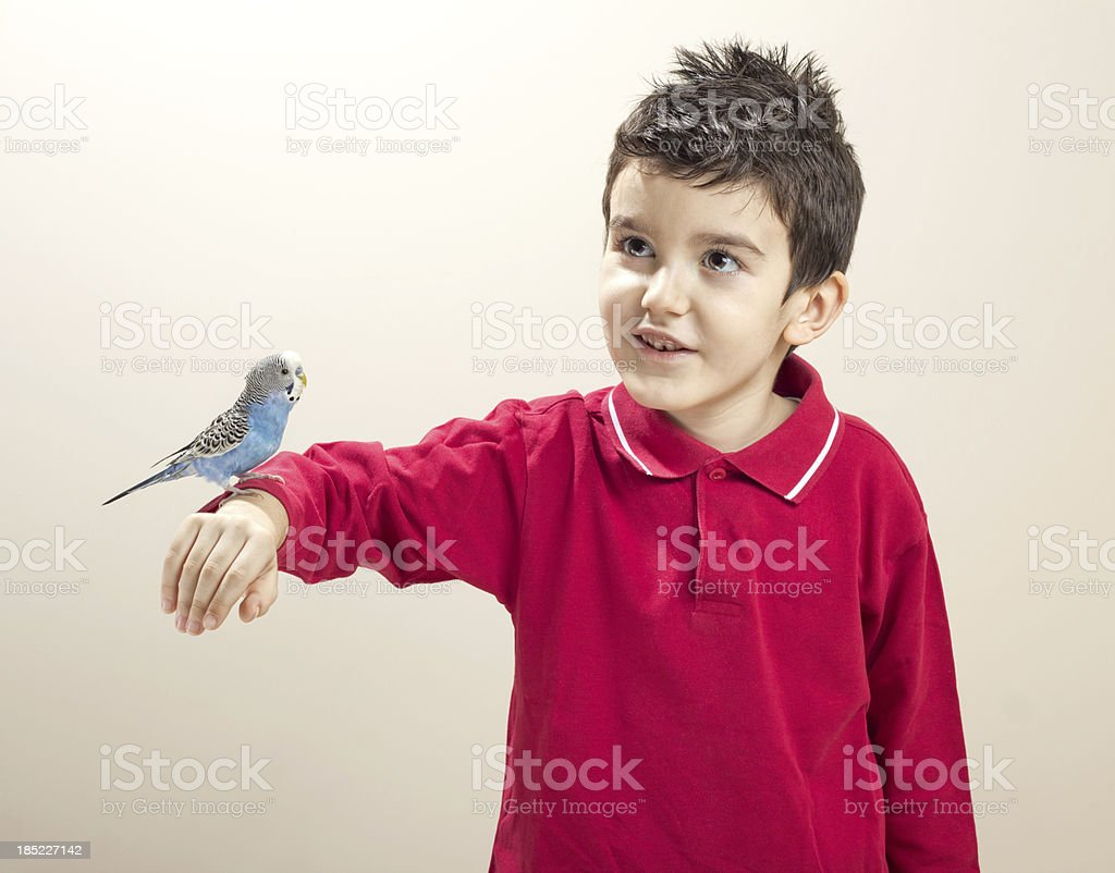 Cute Parakeet on Hand of Child royalty-free stock photo
