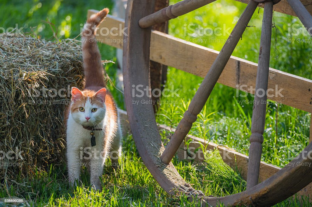 Cute pet cat with collar bell in bright morning sun. stock photo