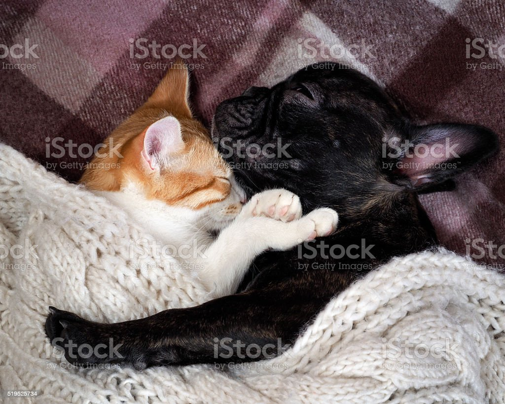 White cat and black dog sleeping together under a knitted blanket....