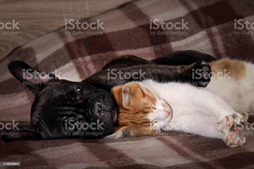 Cute pets. Love the different species of animals stock photo