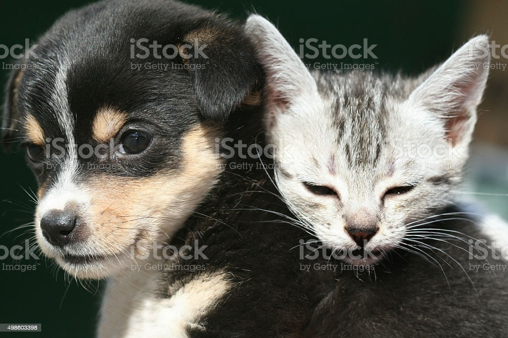cute pets stock photo
