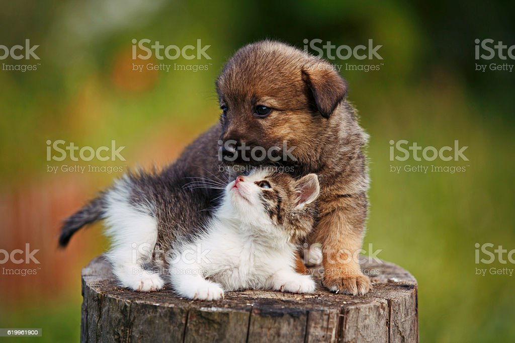 cute puppy and kitten on the grass outdoor; stock photo