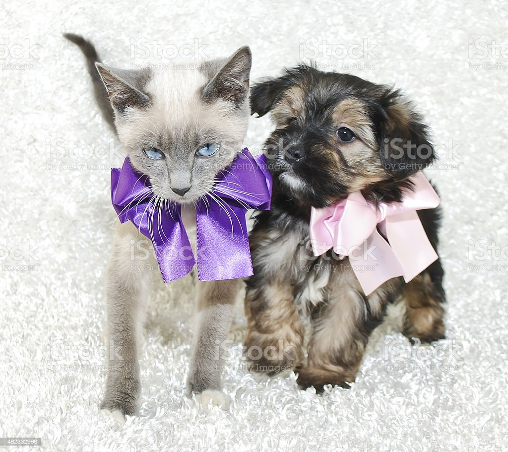 Cute Puppy and Kitten stock photo