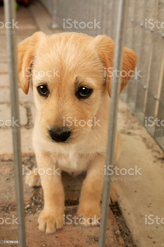 Cute puppy dog behind cage bars royalty-free stock photo