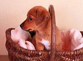 cute puppy dog in basket