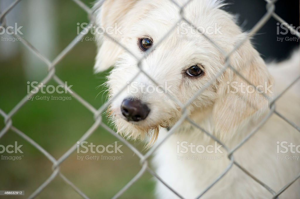 Cute Puppy Dog Looking Through Fence stock photo