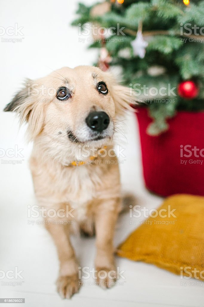 Cute puppy dog near decorated Christmas tree in studio stock photo