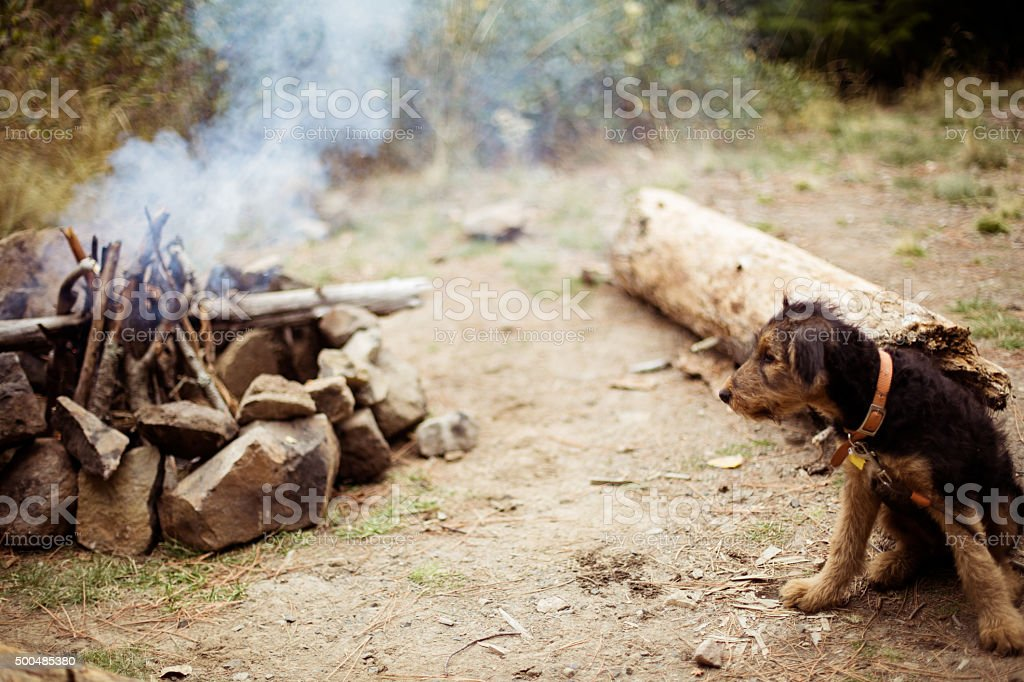Cute Puppy Dog on a Camping Trip stock photo