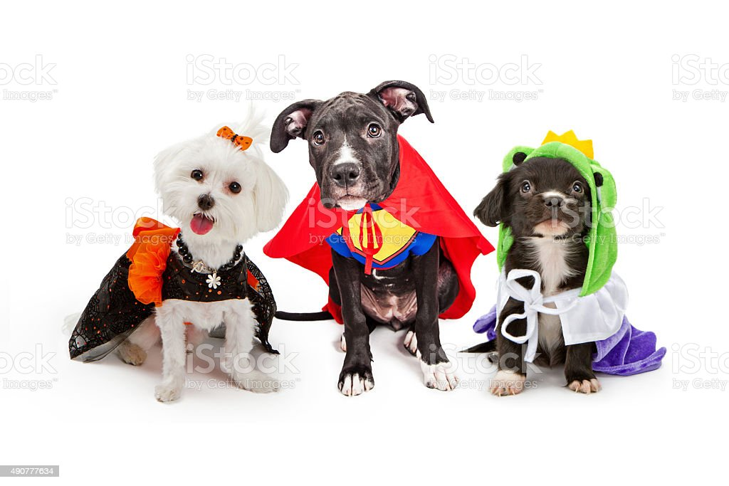 Three cute little puppy dogs dressed up in Halloween costumes...