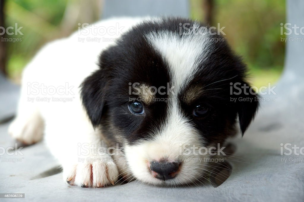 Cute puppy is sleeping. stock photo