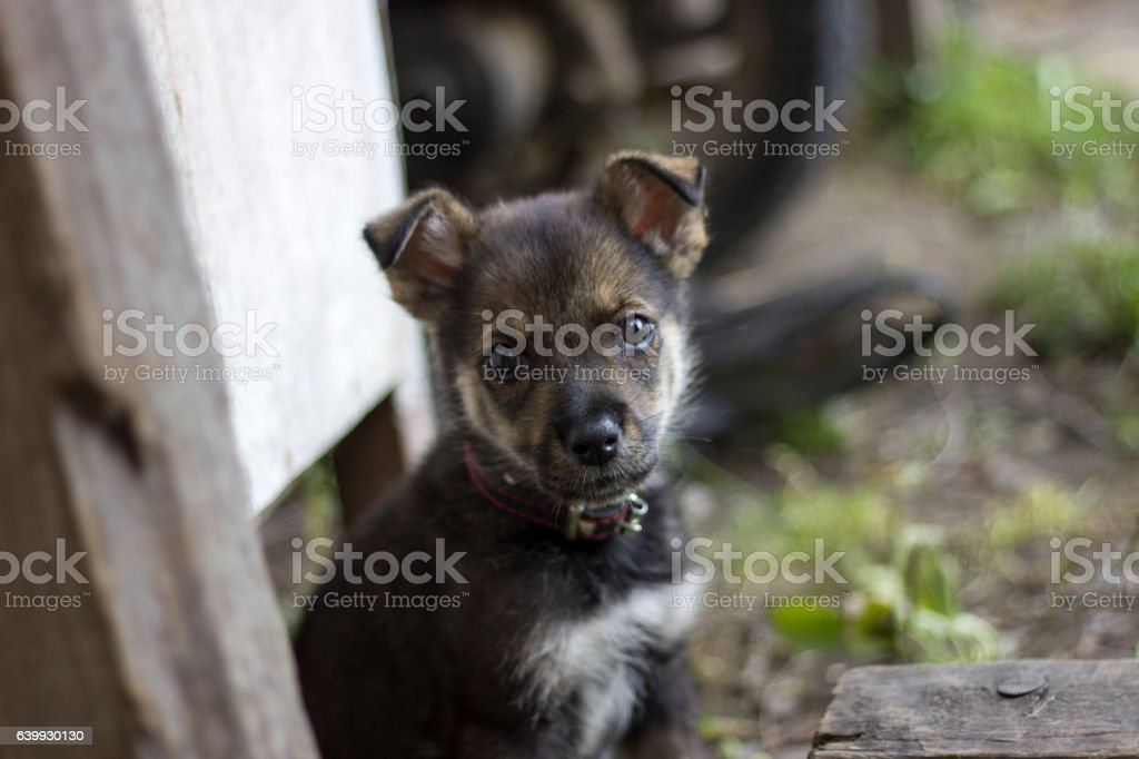 Cute puppy look at you, beg some food. Hungry little stock photo