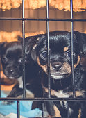Cute Puppy Looking Out From Cage