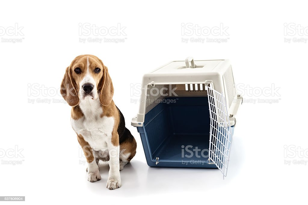 Cute puppy near a portable cage stock photo