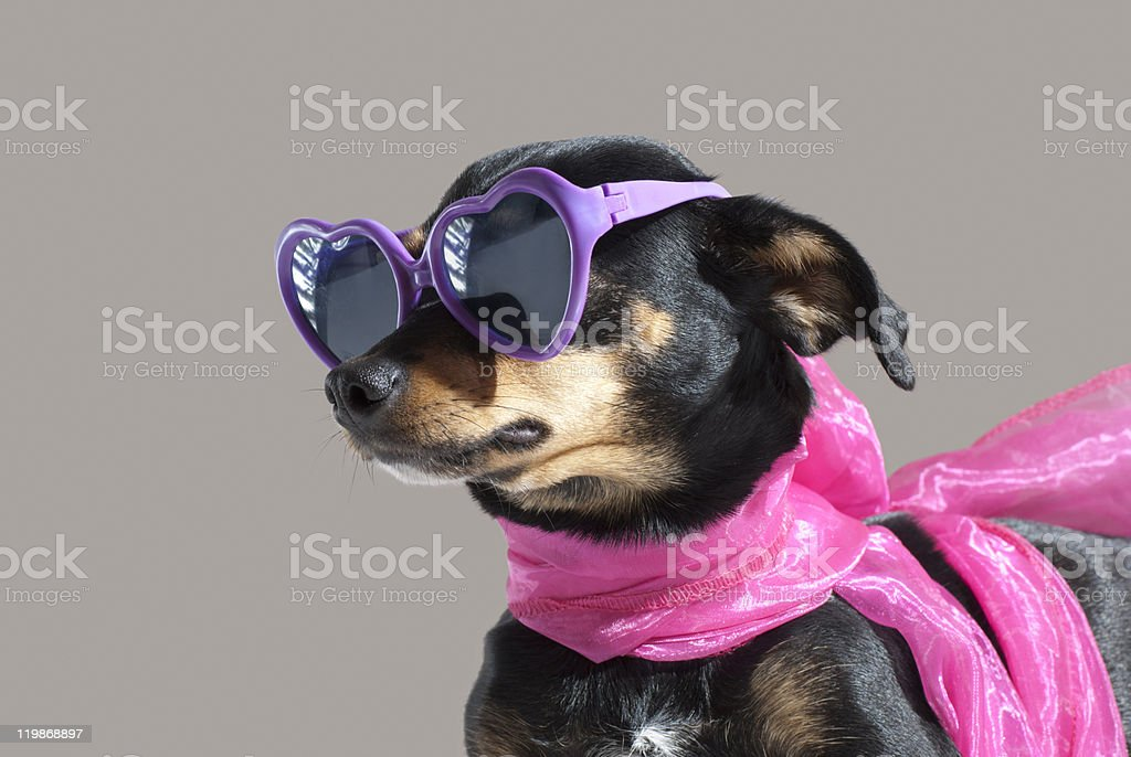 Cute Puppy On A Grey Background stock photo
