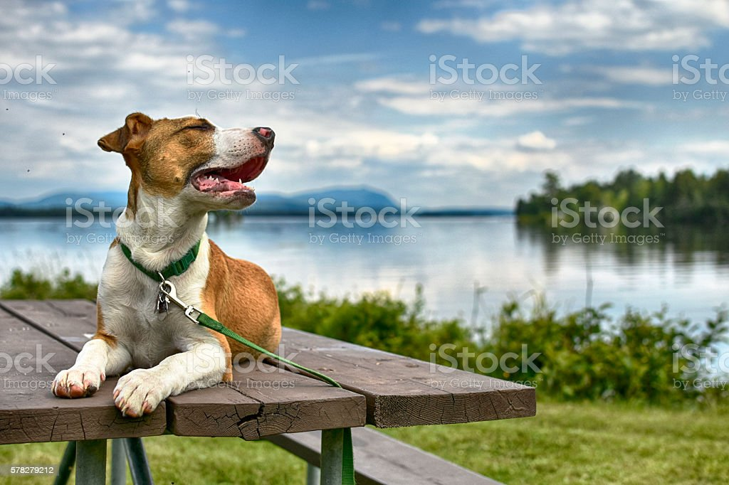 Cute Puppy On Picnic Table stock photo