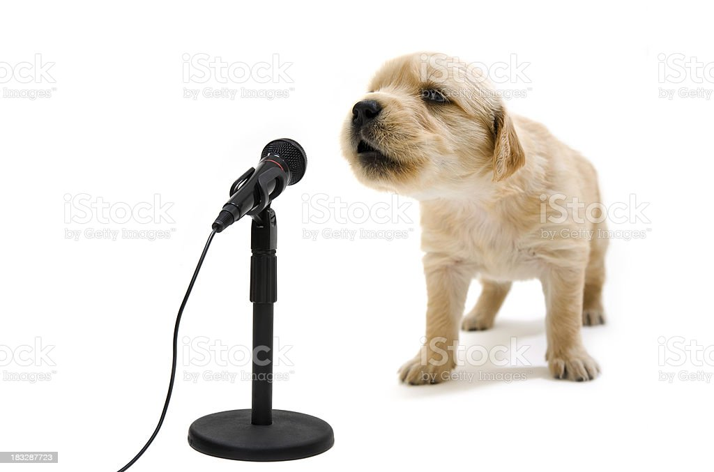Cute puppy singing into microphone stock photo