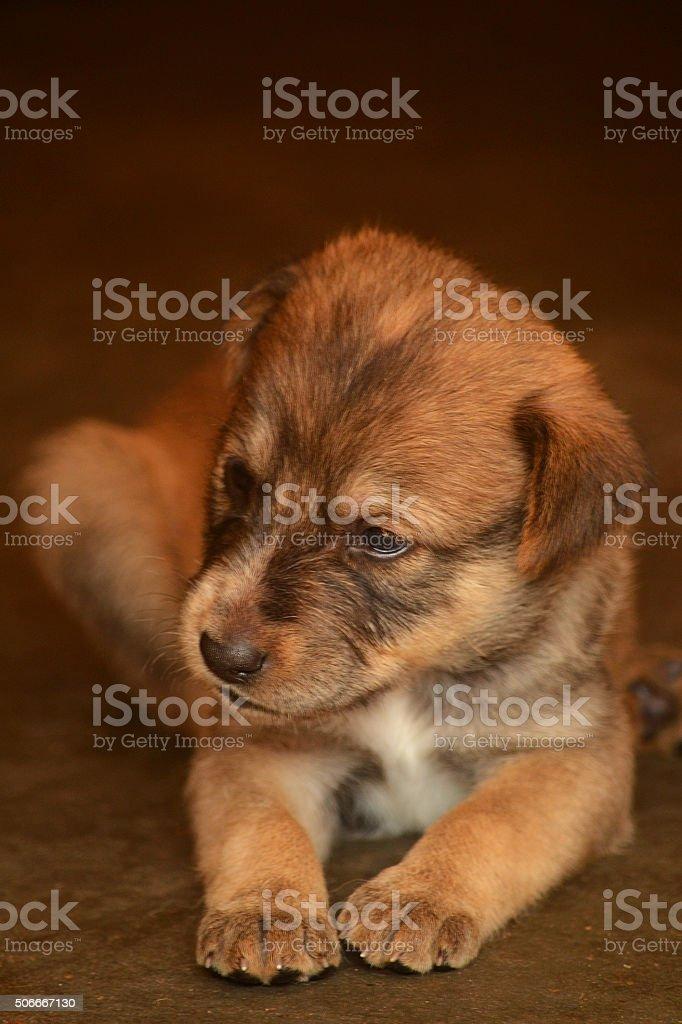 Cute Puppy Sitting stock photo