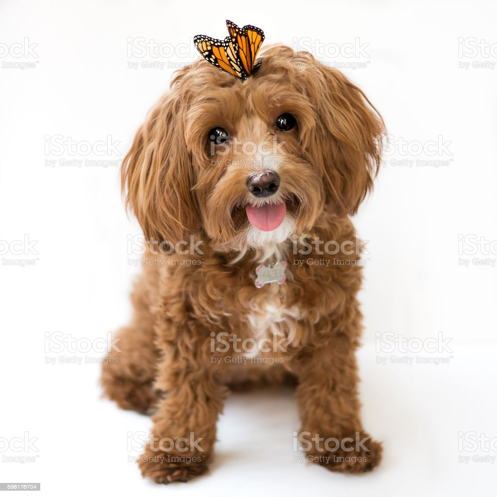 Cute Puppy with Butterfly stock photo
