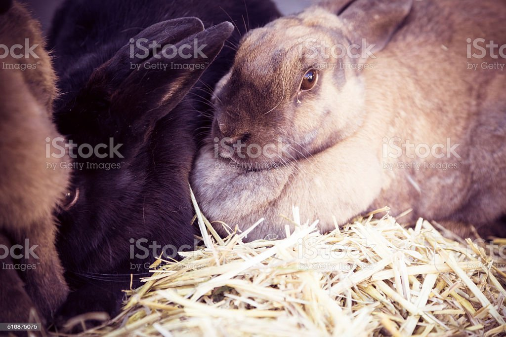 cute rabbits stock photo