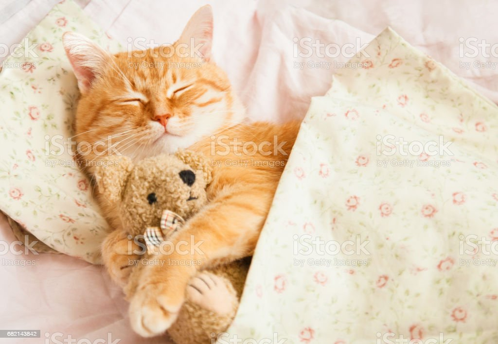 Cute red sleeping cat on a bed with a bear in his paws.
