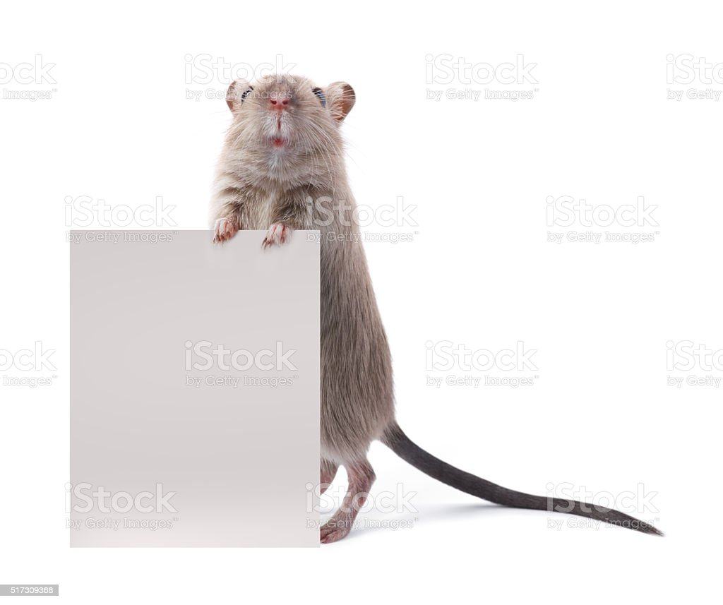Cute rodent holding a sign stock photo