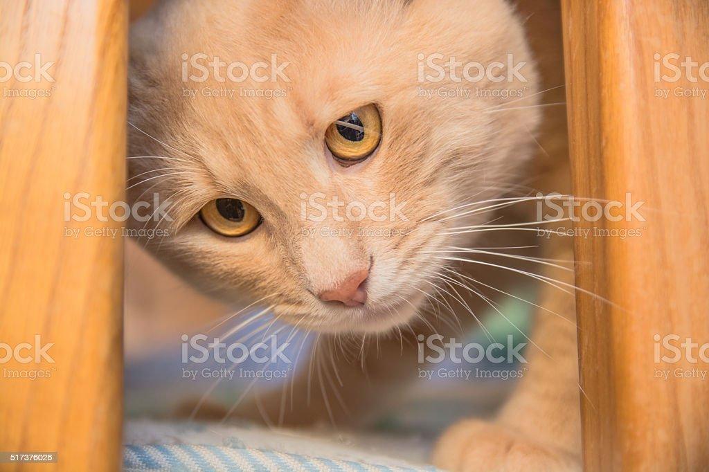 Cute scared yellow domestic cat stock photo