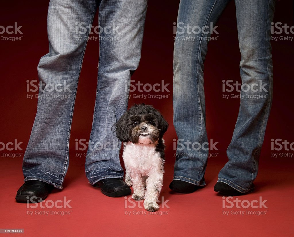 Cute Shih Tzu Poodle Dog With Couple stock photo