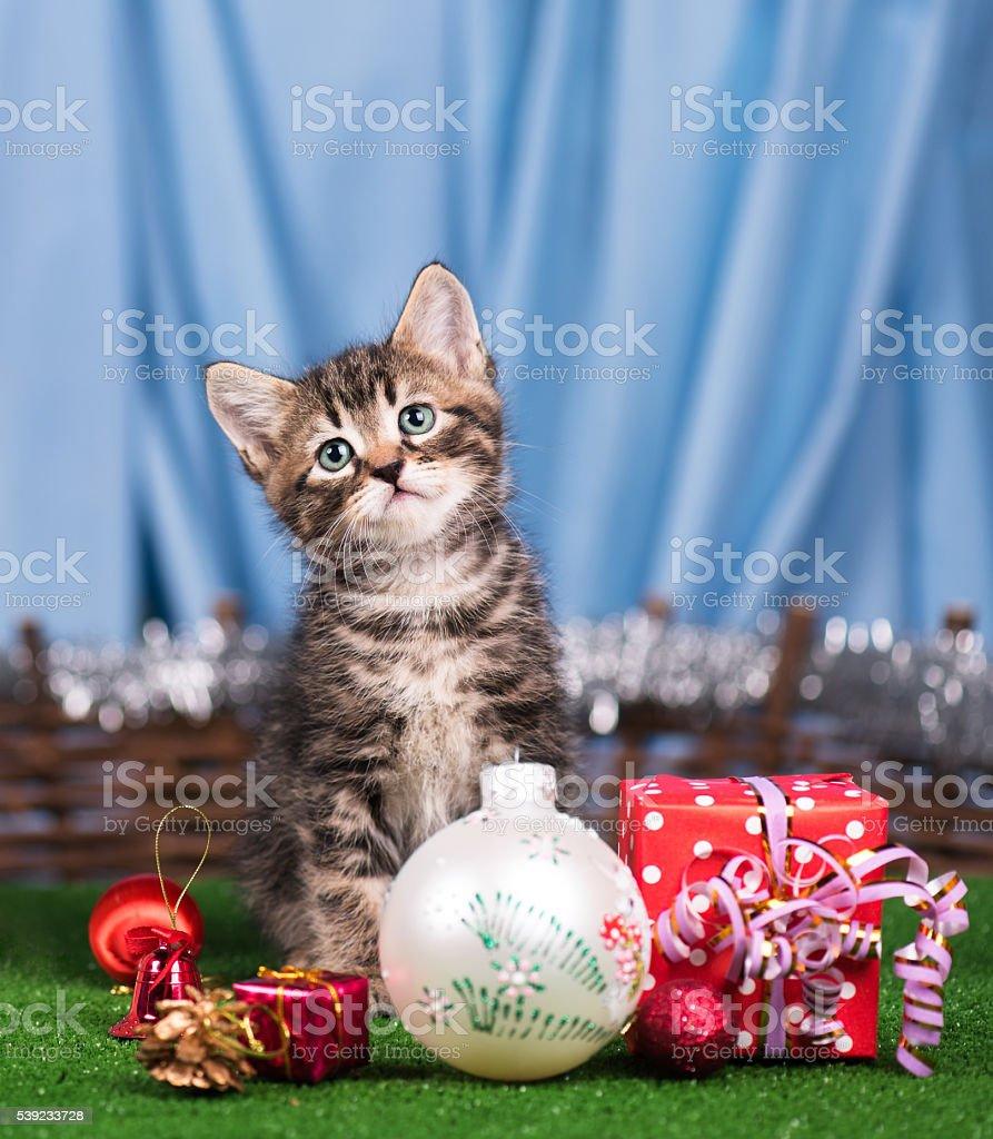 Cute siberian kitten stock photo