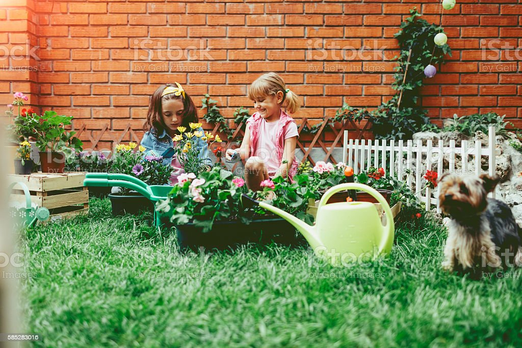Cute Sisters Planting Flowers With Their Pet Dog stock photo