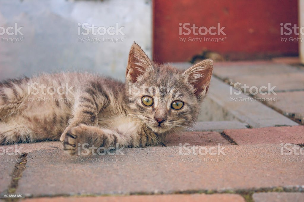 Cute Small Cat Lying On The Bricks On Sunny Day stock photo