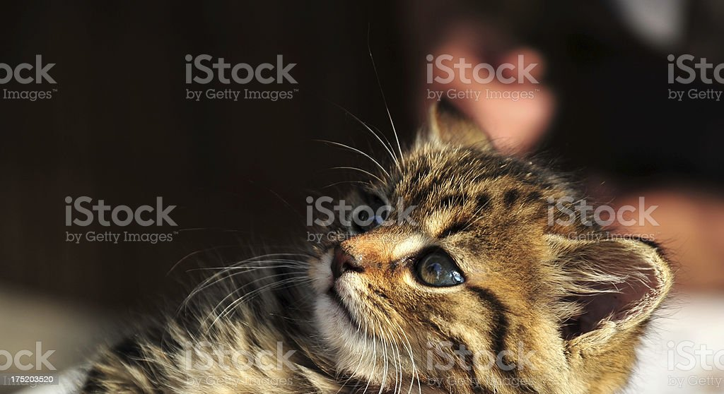 Cute small kitten royalty-free stock photo