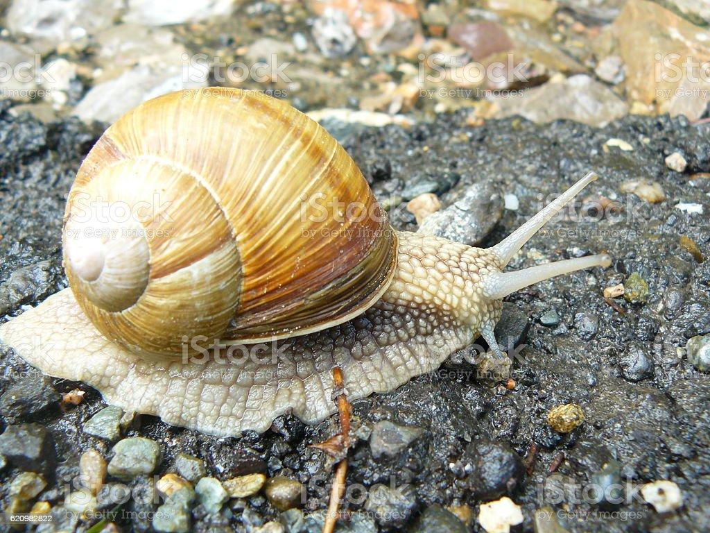 Cute snail stock photo