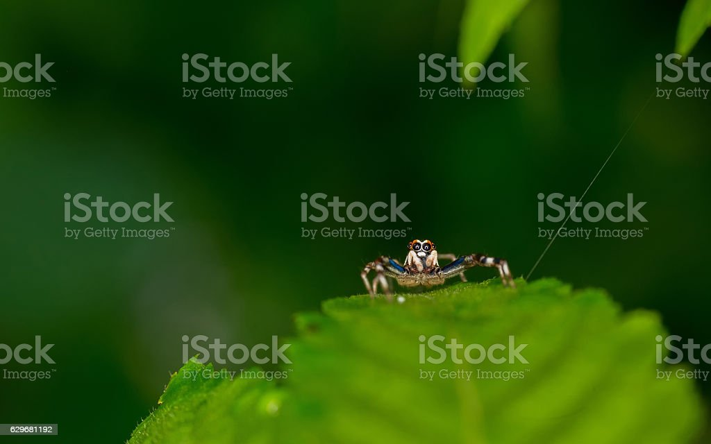 Cute spider with big eyes stock photo