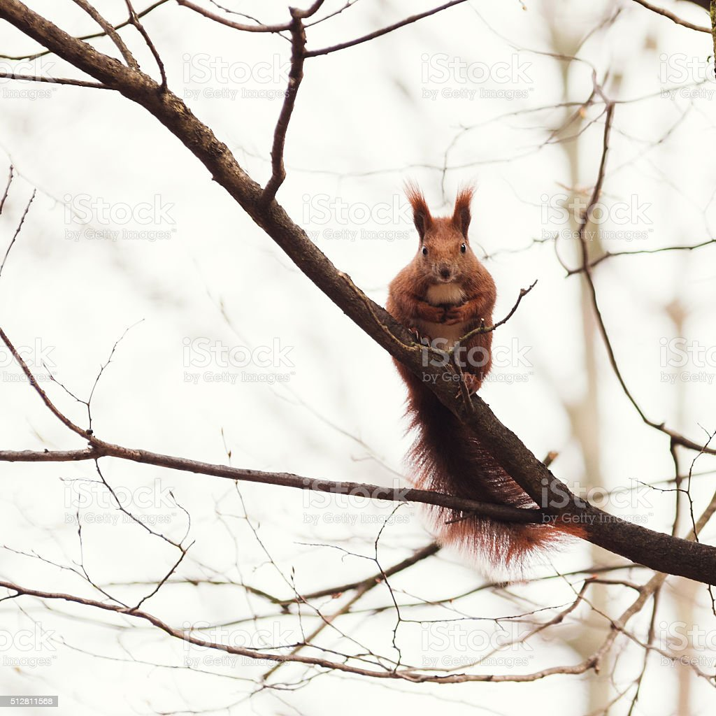 Cute squirrel eating a nut on a branch stock photo