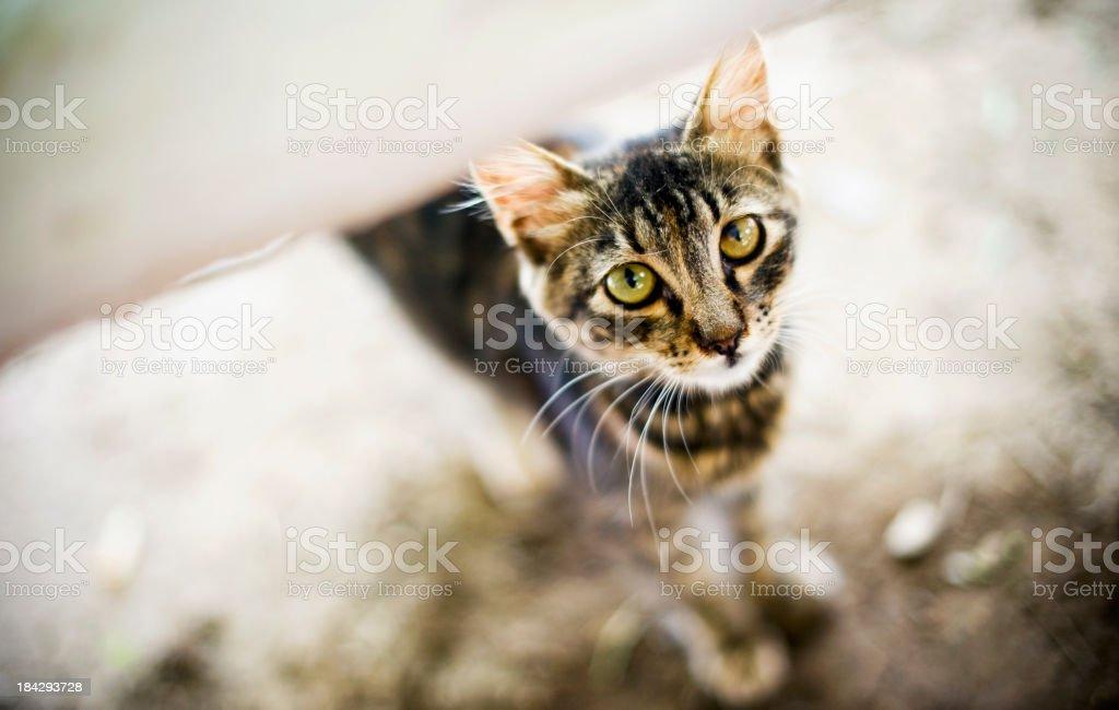 Cute Stray Cat royalty-free stock photo