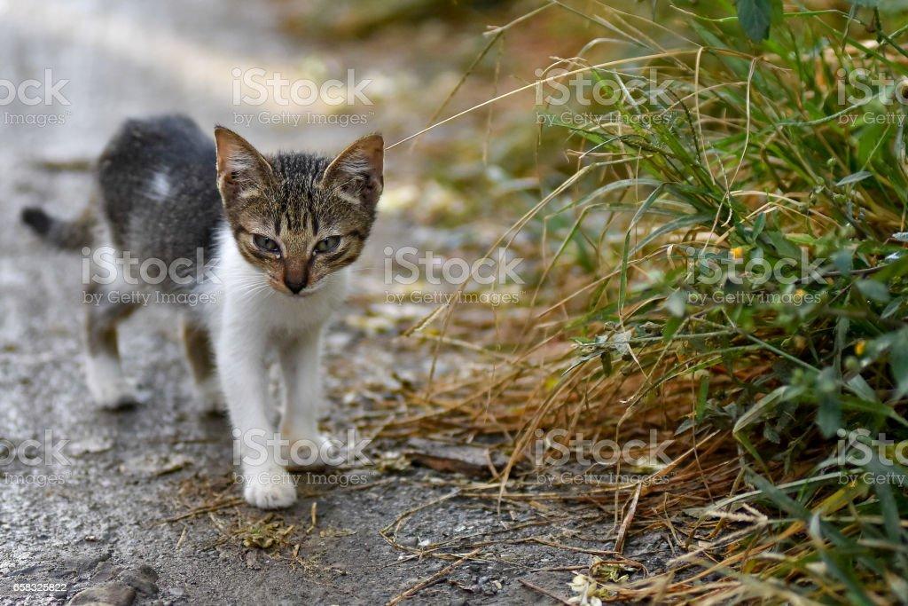 Cute stray kitten cat on mud path stock photo