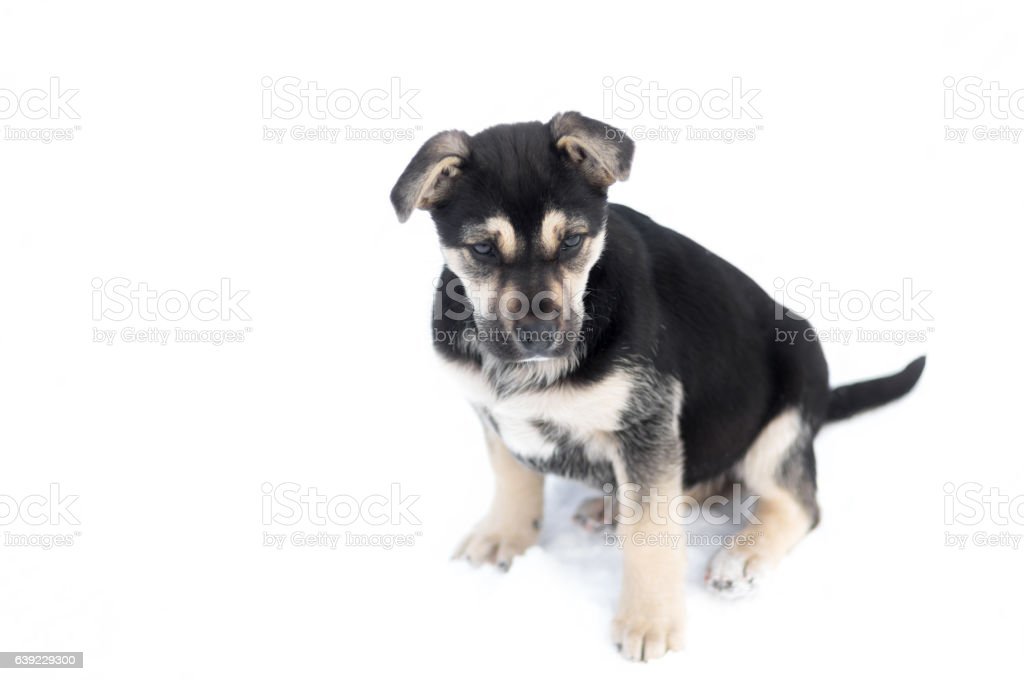 Cute stray puppy sitting on a white background stock photo