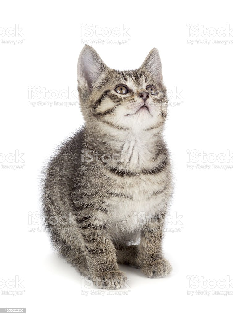 Cute striped kitten on a white background. royalty-free stock photo