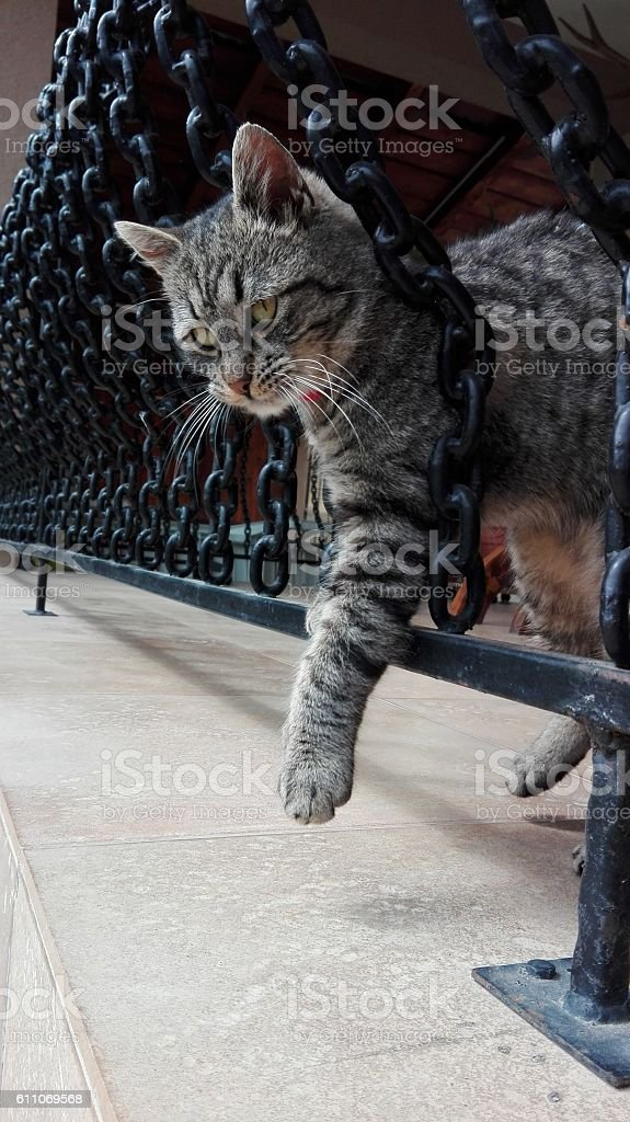 cute stripped kitty playing stock photo