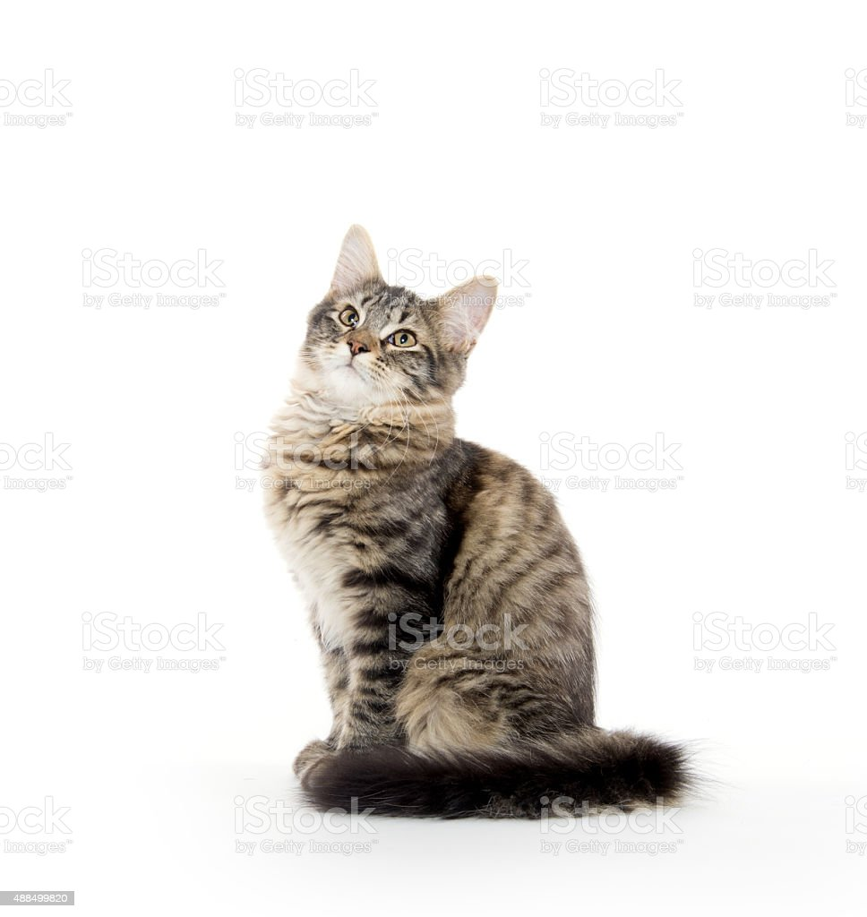 Cute tabby cat stock photo