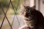 Cute tabby cat sat by a window