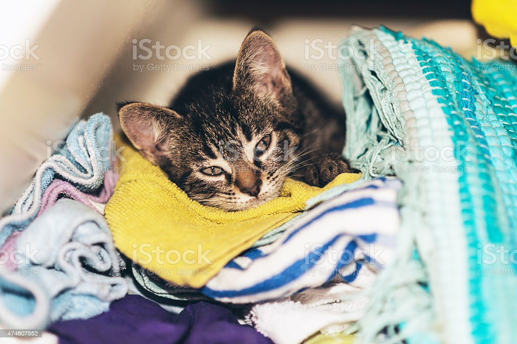 Cute tabby kitten asleep in the laundry stock photo