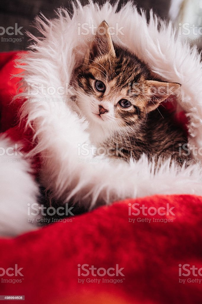 Cute tabby kitten in a santa hat looking at you stock photo