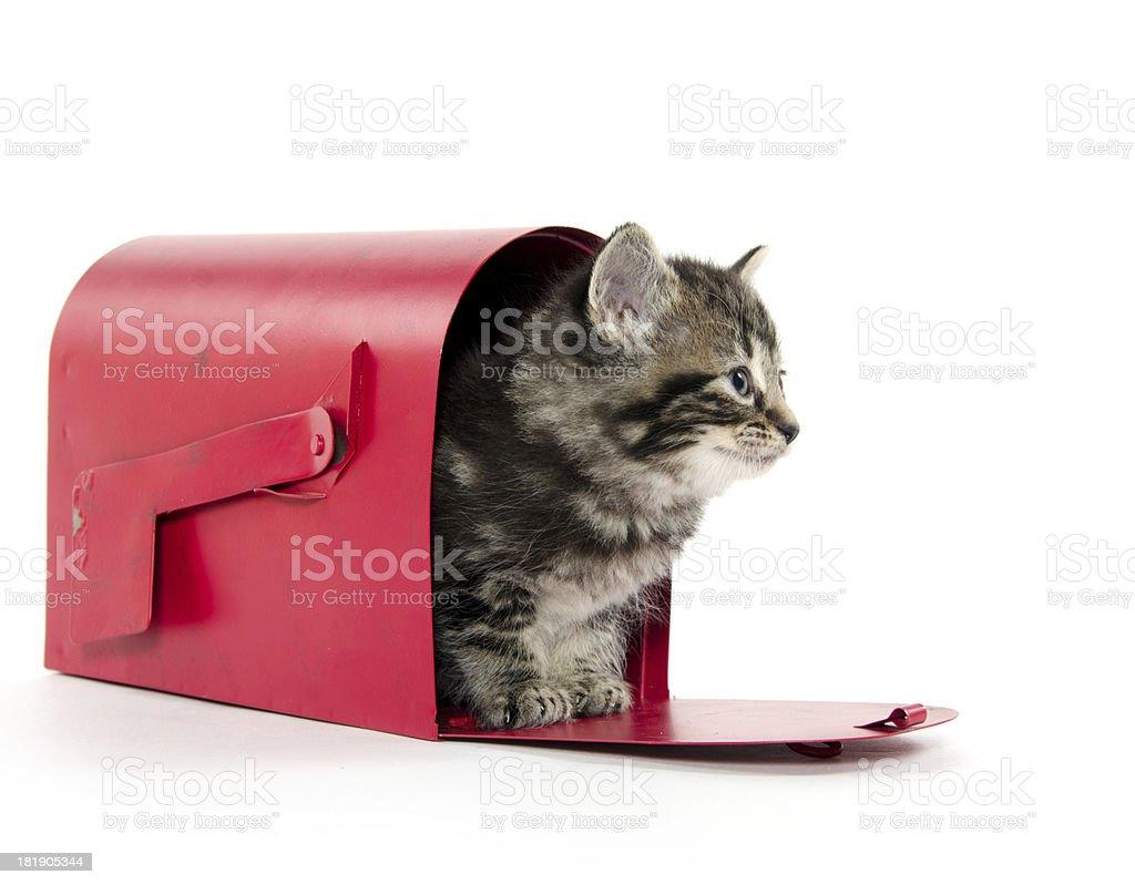 Cute tabby kitten in mailbox royalty-free stock photo