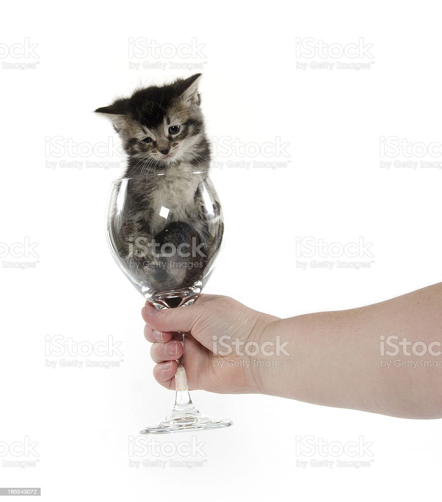 Cute tabby kitten in wine glass stock photo