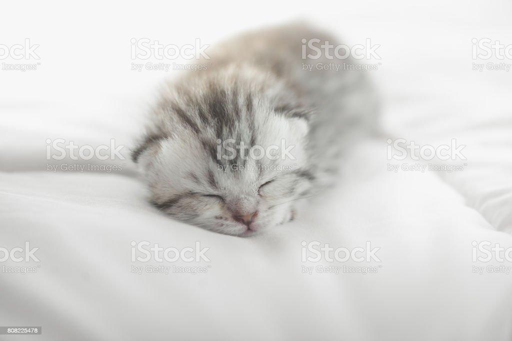 Cute tabby kittens lying stock photo