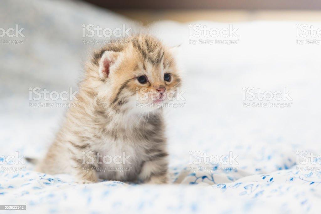 Cute tabby kittens sitting stock photo